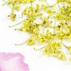 Китайский натуральный чай из цветов османтуса 250g