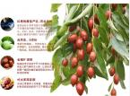 hot sale delicious dried red dates 60g Chinese Jujube health care green food for stronger sex dried fruit