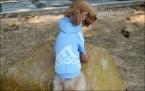 новинка весна осень зима щенок пальто, Pet хлопок спортивной одежды для собак, Свитер пальто небольшой Adidog толстовки