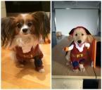 Горячая пиратский мультфильм собака толстовки товаров для домашних животных щенок кошка хлопок бесплатная доставка любимчика оборудование теплая одежда M-XL