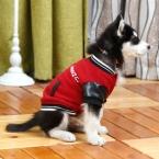 стиль Pet куртка для родитель - ребенок наряд кошка пальто S / M / L / XL / XXL