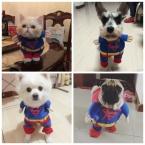 Смешно Супер Человек Собака Одежда Щенок Плащ Красный Синий Герой Питомец Косплей Одежда Кошка Футболка Котенок Летний Костюм