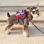 Пэт мешок школы поводок собаки настроить кенгуру и сумки красивый проведение кот поводок щенка жгутов рюкзак Pet открытый путешествие герой мешок