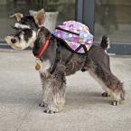 Пэт мешок школы кошка носители точки мешок проведение животное поводок подвесные собака рюкзак щенок открытый дорожная сумка товаров для домашних животных