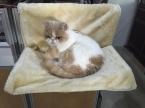 новое поступление супер мягкий кот спит кровать кошки флягодержатель маленькая собака дом котенок коврики щенок на гамак подушка товары для животных