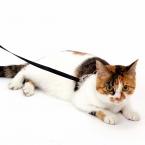 чистый цвет нейлон выдвижной кошки поводок и использовать 5 цветов щенок поводок оптовая продажа цена