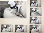 Прочный домашних собак Safty пояса кошка котенок путешествия ремня щенок клип сдержанность осваивать авто тяговые приводит собаки поставки