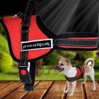 Лучшее качество домашних собак использовать домашних собак цепи поводок воротник поставщик продукт 3 размер 2 цвет для домашних собак оптовая продажа